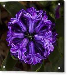 Symmetry In Purple Acrylic Print
