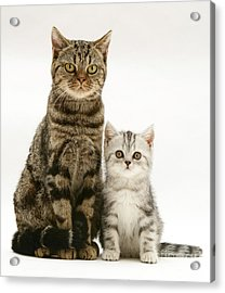 Tabby Cat And Kitten Acrylic Print by Jane Burton