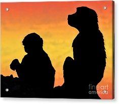 Taif Monkey Acrylic Print by Graham Taylor