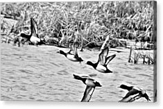 Take Flight No. 2 In Black And White Acrylic Print by Janice Adomeit