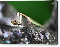 Take Me To Your Leader Acrylic Print by Lisa Sorrell