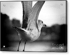 Take Off Acrylic Print by Jenn Bodro