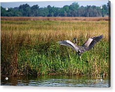 Take Off Acrylic Print by Linda Mesibov