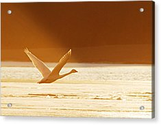 Takeoff At Sunset Acrylic Print by Larry Ricker