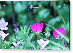 Takeoff Acrylic Print by Becky Lodes