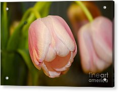 Acrylic Print featuring the photograph Taking A Bow by MaryJane Armstrong