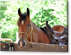 Taking A Break Acrylic Print by Jan Amiss Photography