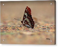 Taking A Breather Acrylic Print by Patrick Witz