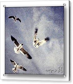 Taking Flight Acrylic Print