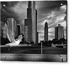 Taking Wing Acrylic Print by Coby Cooper