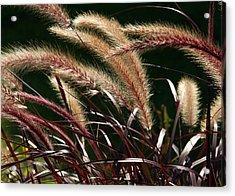 Tall Grass Acrylic Print by Jim Nelson