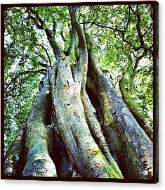 #tall #green #tree #nature #trunk #skin Acrylic Print