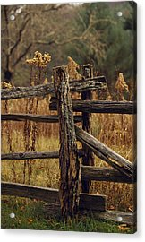 Tall Weeds In Autumn Brown Acrylic Print by Raymond Gehman