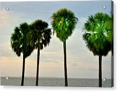 Tampa Bay Acrylic Print by Bill Cannon
