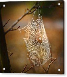 Tangled Web Acrylic Print by Brenda Bryant