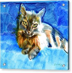 Tara The Cat Acrylic Print