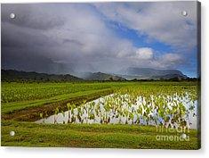 Taro Storm Acrylic Print by Mike  Dawson