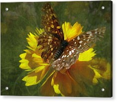 Tattered Wings Acrylic Print by Cindy Wright