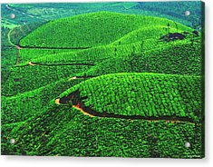 Tea Garden Acrylic Print by Vinod Nair