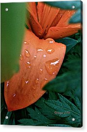 Tears Acrylic Print by Rotaunja