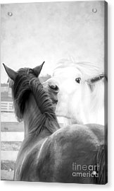 Telling Secrets In Black And White Acrylic Print by Darren Fisher
