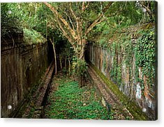 Temple Overgrown By The Jungle Acrylic Print by Artur Bogacki