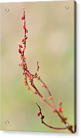 Tenderness In Japanese Style Acrylic Print