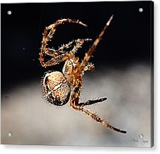 Tending The Web Invisible Acrylic Print