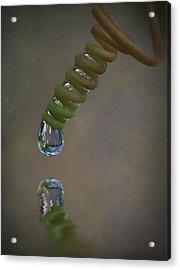 Tendril Droplet  Acrylic Print by Kym Clarke