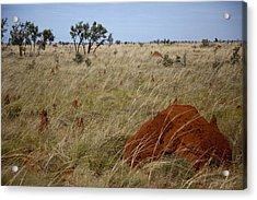 Termites Acrylic Print by Carole Hinding