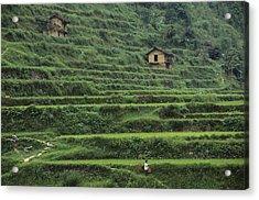Terraces For Agriculture Acrylic Print by Raymond Gehman