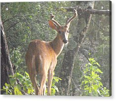 Texas Buck In The Rain Acrylic Print by Rebecca Cearley