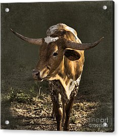 Texas Longhorn # 4 Acrylic Print by Betty LaRue