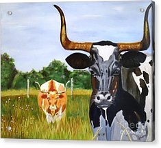 Texas Longhorn Two Some 2 Acrylic Print by Gina DePasquale