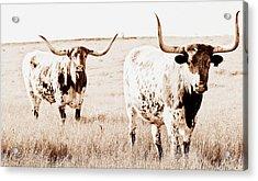 Texas Pair Acrylic Print by Elizabeth Hart