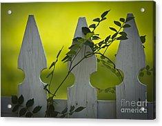 Texas Picket Fence Acrylic Print
