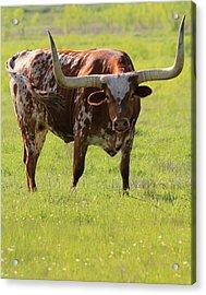 Texas Pride Acrylic Print