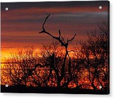 Texas Spanish Oak Tree  Sunset Acrylic Print by Rebecca Cearley
