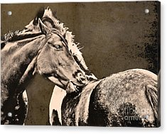 Textured Horses Acrylic Print by Darren Burroughs
