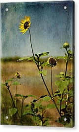 Textured Sunflower Acrylic Print by Melany Sarafis
