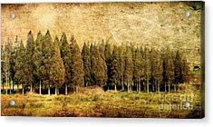 Textured Trees Acrylic Print