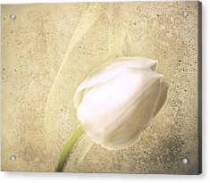 Textured Tulip Acrylic Print by Fiona Messenger