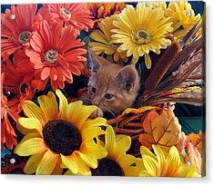 Thanksgiving Kitten Sitting In A Flower Basket Peeking Through Sunflowers - Kitty Cat In Falltime  Acrylic Print by Chantal PhotoPix