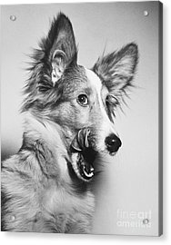 That Looks Good Acrylic Print by M E Browning and Photo Researchers