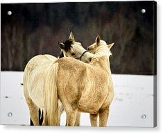 That Loving Moment Acrylic Print by Gary Smith