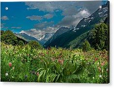The Alpine Meadows Acrylic Print by Olga Vlasenko