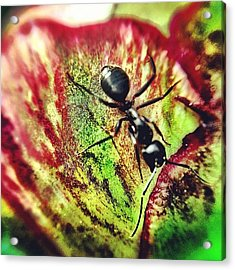 The Ants Have Arrived Acrylic Print