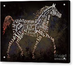 The Arabian Horse In Typography Acrylic Print by Ginny Luttrell