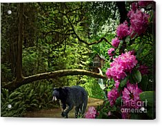 The Bear Went Over The Mountain Acrylic Print by Lianne Schneider
