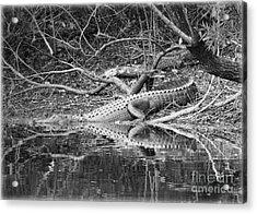 The Beast That Lives Under The Bridge Acrylic Print by Carol Groenen